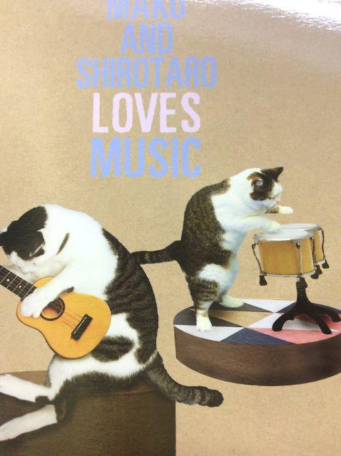 猫のまこちゃんのでっかいポストカードギターを弾くまこのクローズアップ画像
