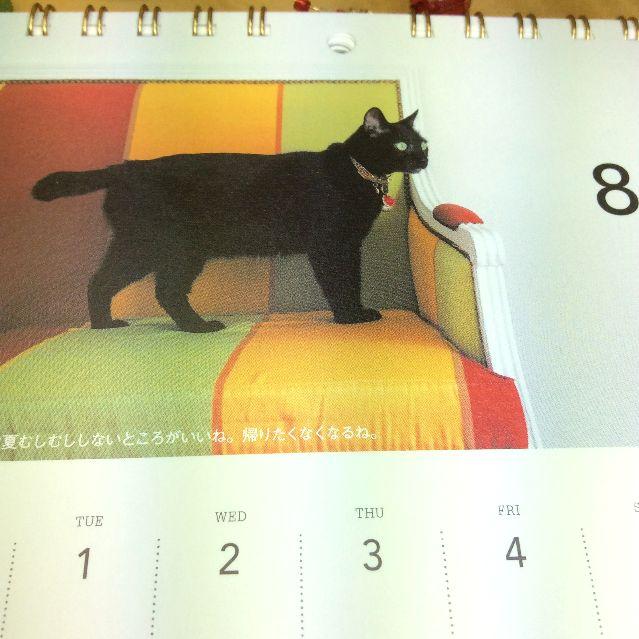 世界を旅する黒猫ノロの2017年壁にも掛けられる卓上カレンダーのソファーにノロちゃんが乗っている写真