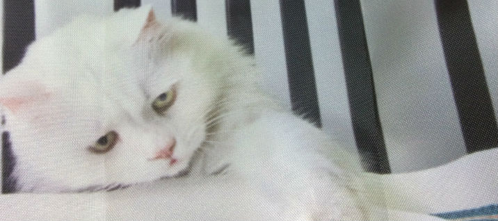 ルートートルーショッパー猫の画像